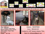 Lodging and Boarding of Dogs in Mumbai