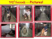 Dog Sitters in Mumbai - Lodging and Boarding of Dogs
