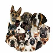 Offering Varieties of Pets in all Over India